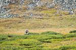Ben Melt Swanepoel rides through the alpine tundra.