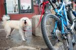 At the Brown Dog in Telluride, they have vicious guard dogs instead of bike locks.